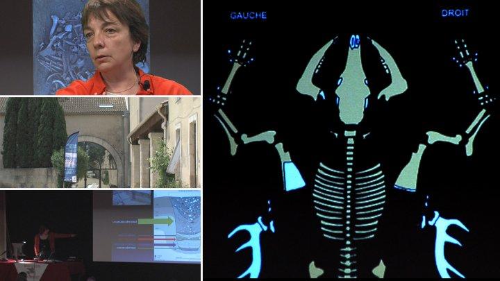 Archéozoologie, axe transversal entre CNRS et UM3